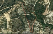 288, Land 1.2 Ha with olive grove and panoramic sea view