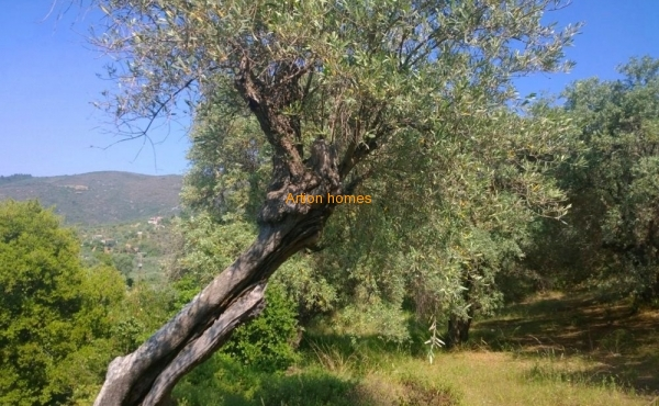 A plot by the sea: centenary olive trees and a beautiful view