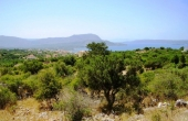 449, Stony cypress, panorama of the sea and forest